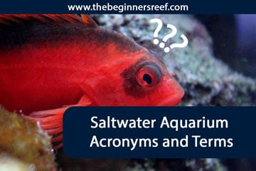 The Ultimate Guide To Saltwater Acronyms & Terms