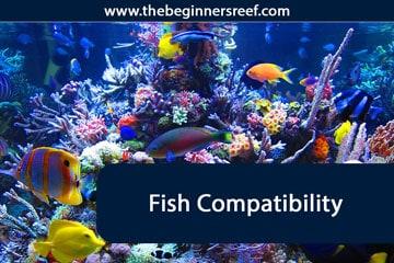 Fish Compatability Chart