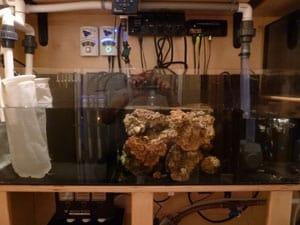 Live Rock Aquarium Sump