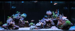 My Reef Aquarium