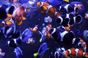 Overstocked Marine Aquarium