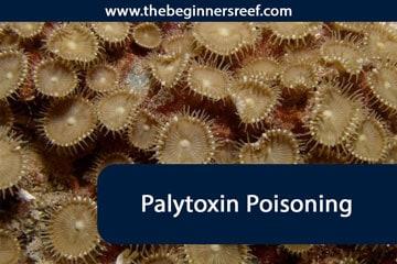 Palytoxin-Poisoning Header