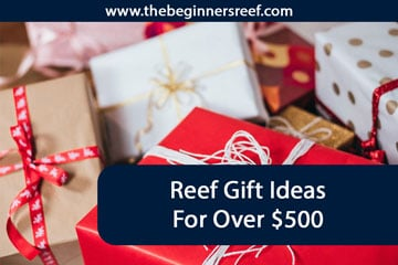 Reef Gift Ideas Over $500
