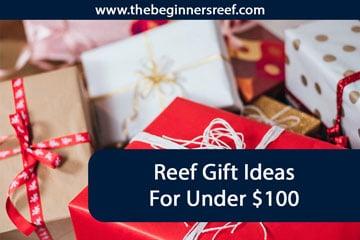 Reef Gift Ideas Under $100