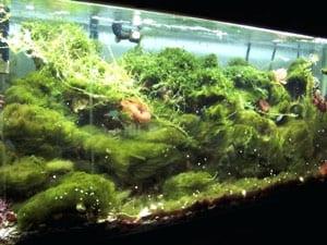 Serious Aquarium Algae Bloom
