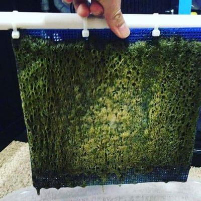 Algae Turf Scrubber