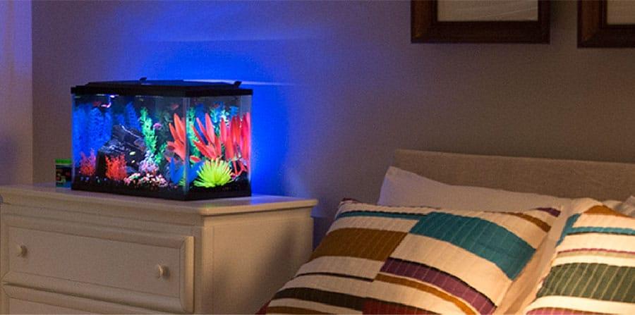 Bedroom Aquarium Location