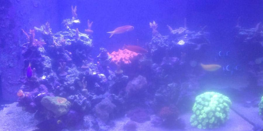 Cloudy Aquarium Water