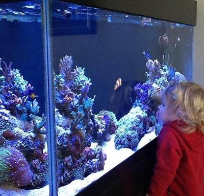 Daughter Reef