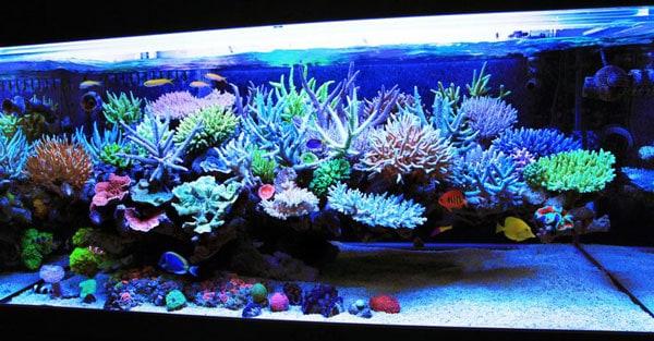 Mr Kang's Korean Reef