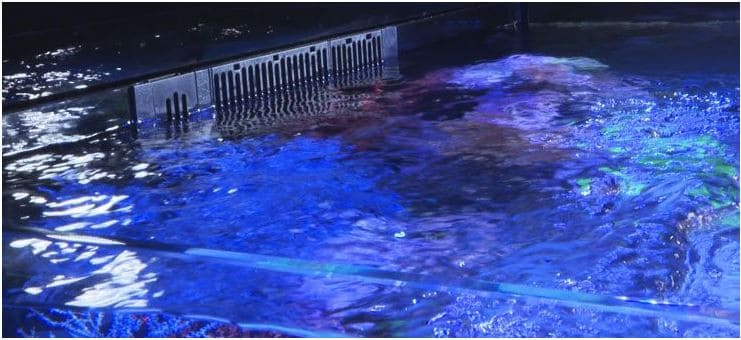 Aquarium Weir